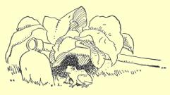 Mister Hop-Toad 45