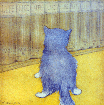 The Rubaiyat of A Persian Kitten